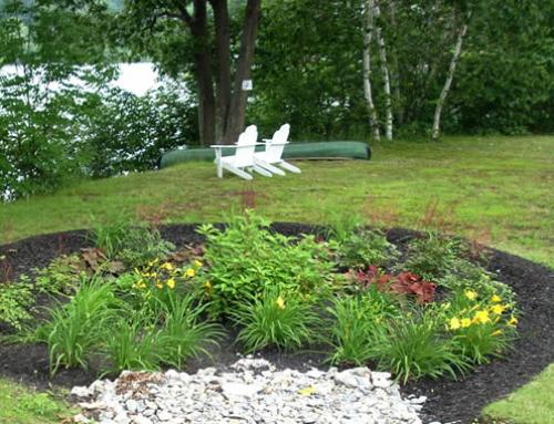 Raingardens and drainage work